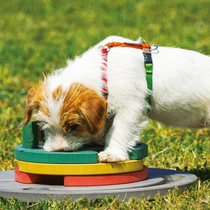 Giochi di attivazione mentale per il cane