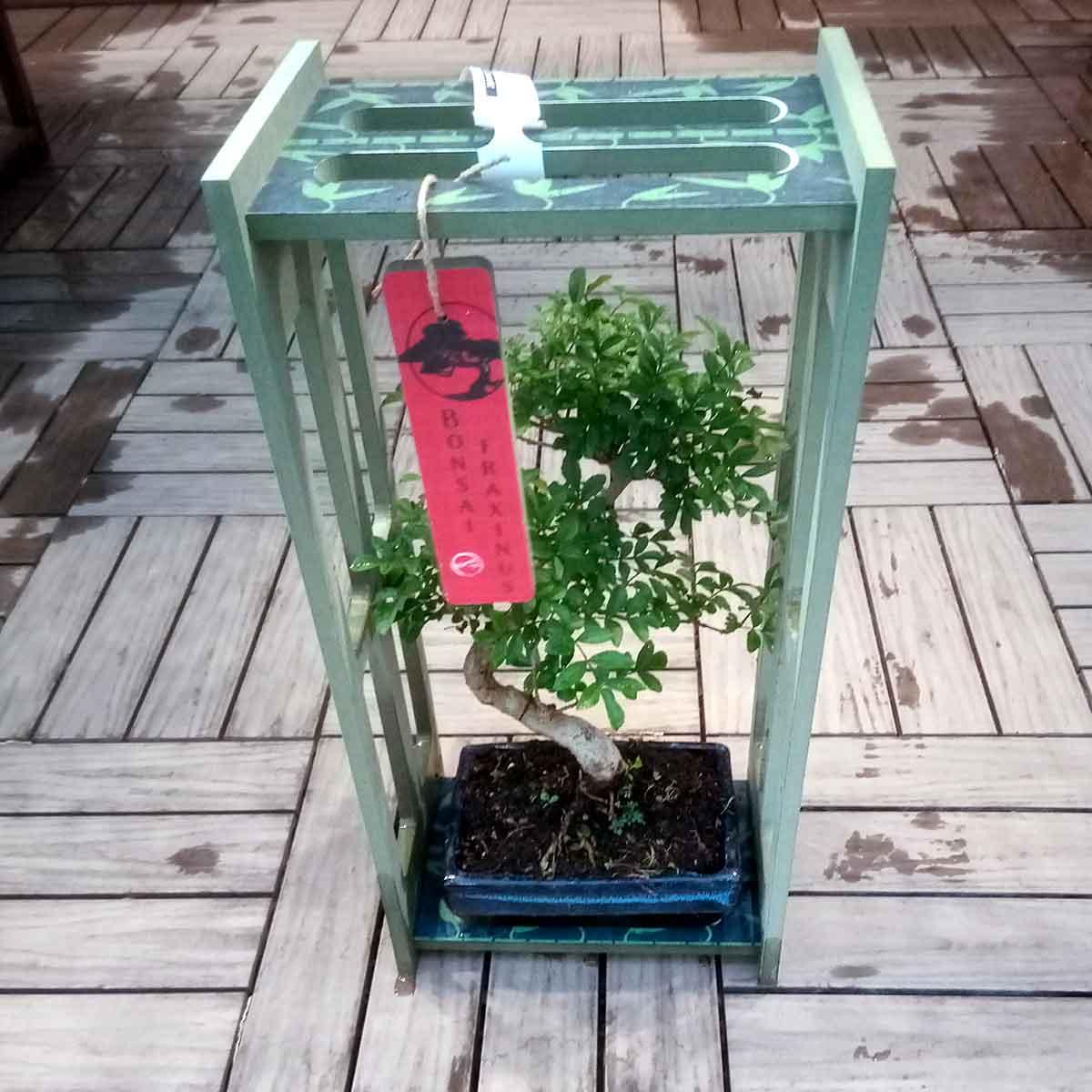 Bonsai in cassetta di legno