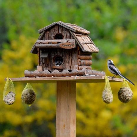 Birdfeeding: come aiutare gli uccellini con l'arrivo del freddo