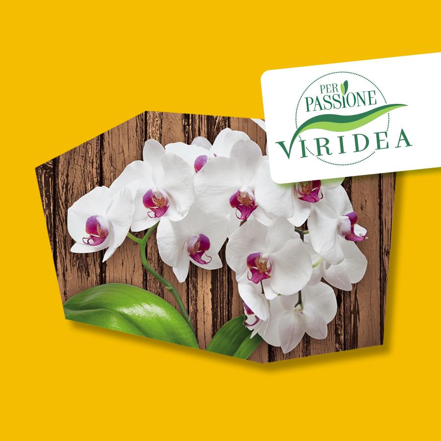 Per Passione – Orchidee Phalaenopsis