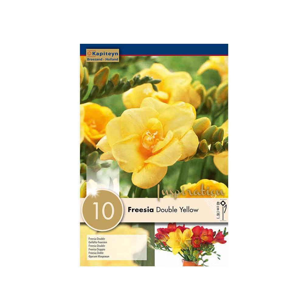 Freesia 'Double Yellow' (10 bulbi)