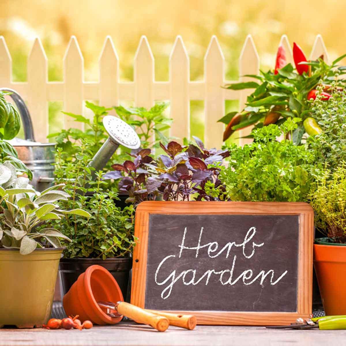 Herb garden, utilità e bellezza
