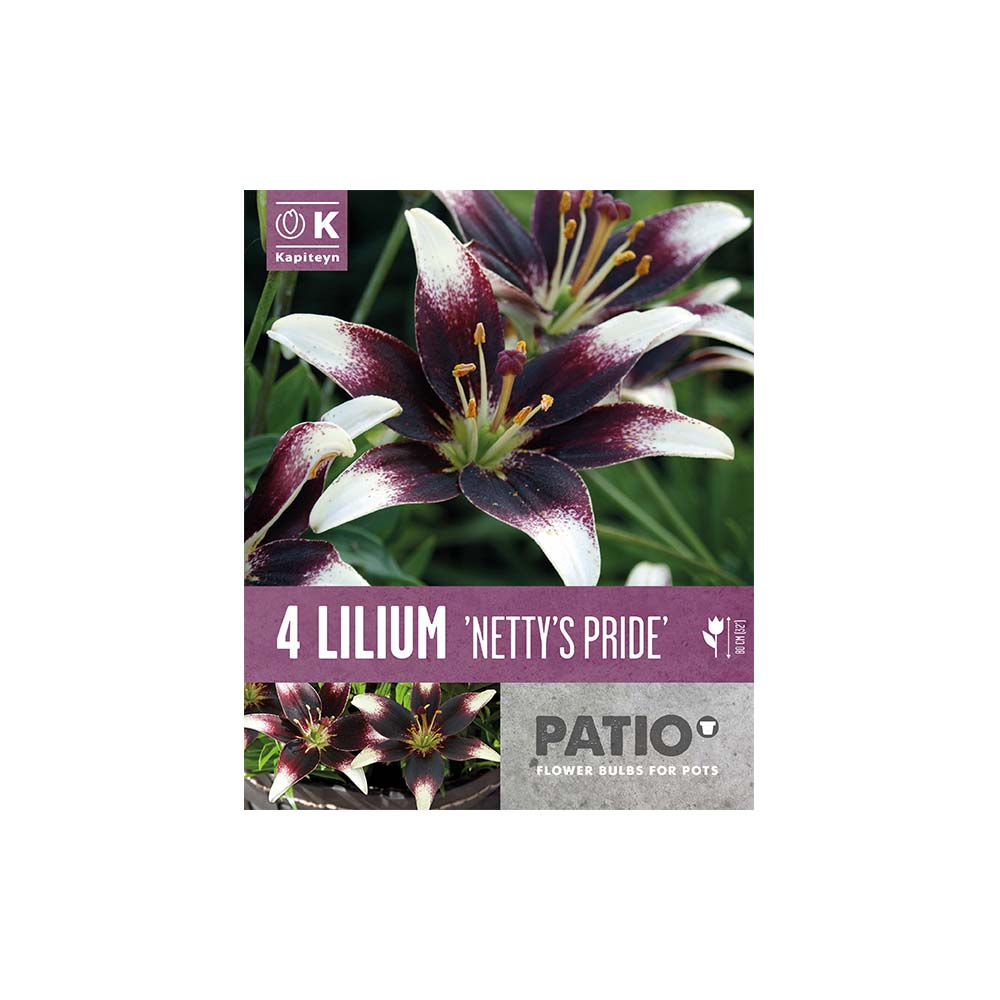 Lilium 'Netty's Pride' (4 bulbi)