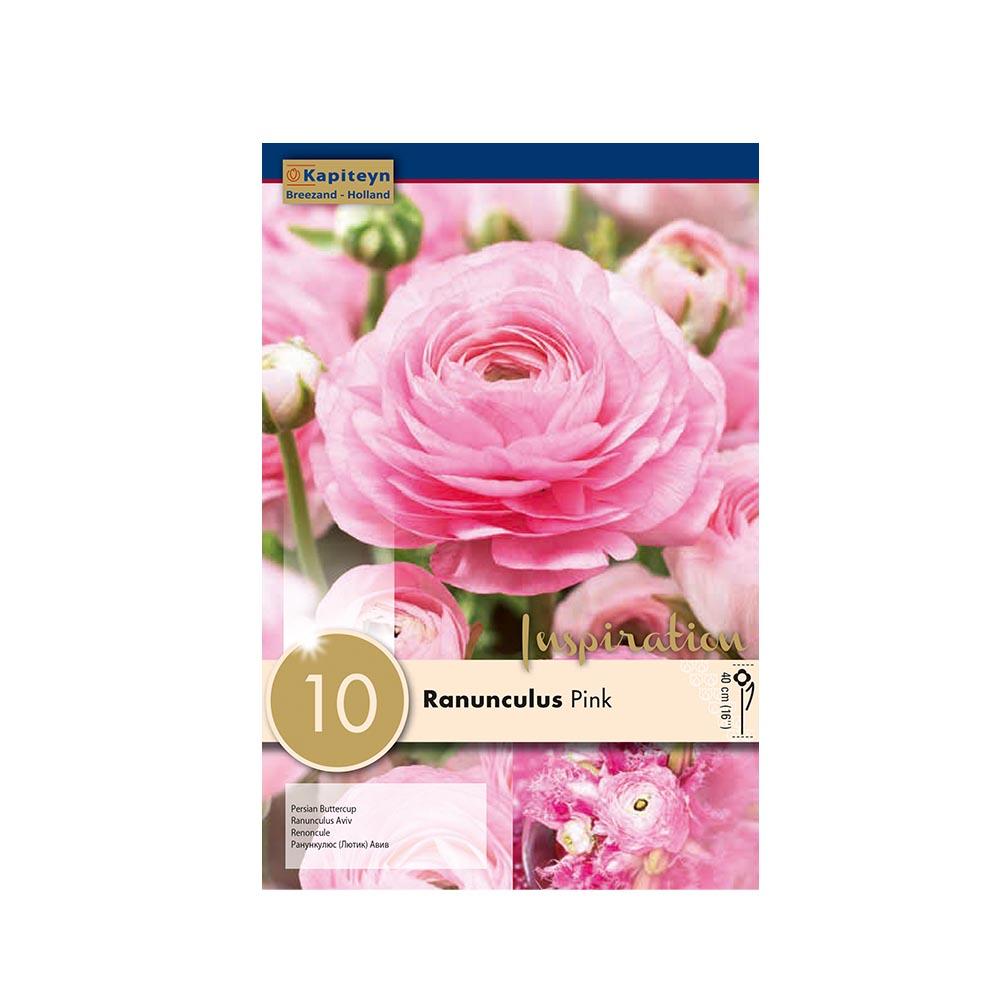 Ranunculus 'Aviv Pink' (10 bulbi)