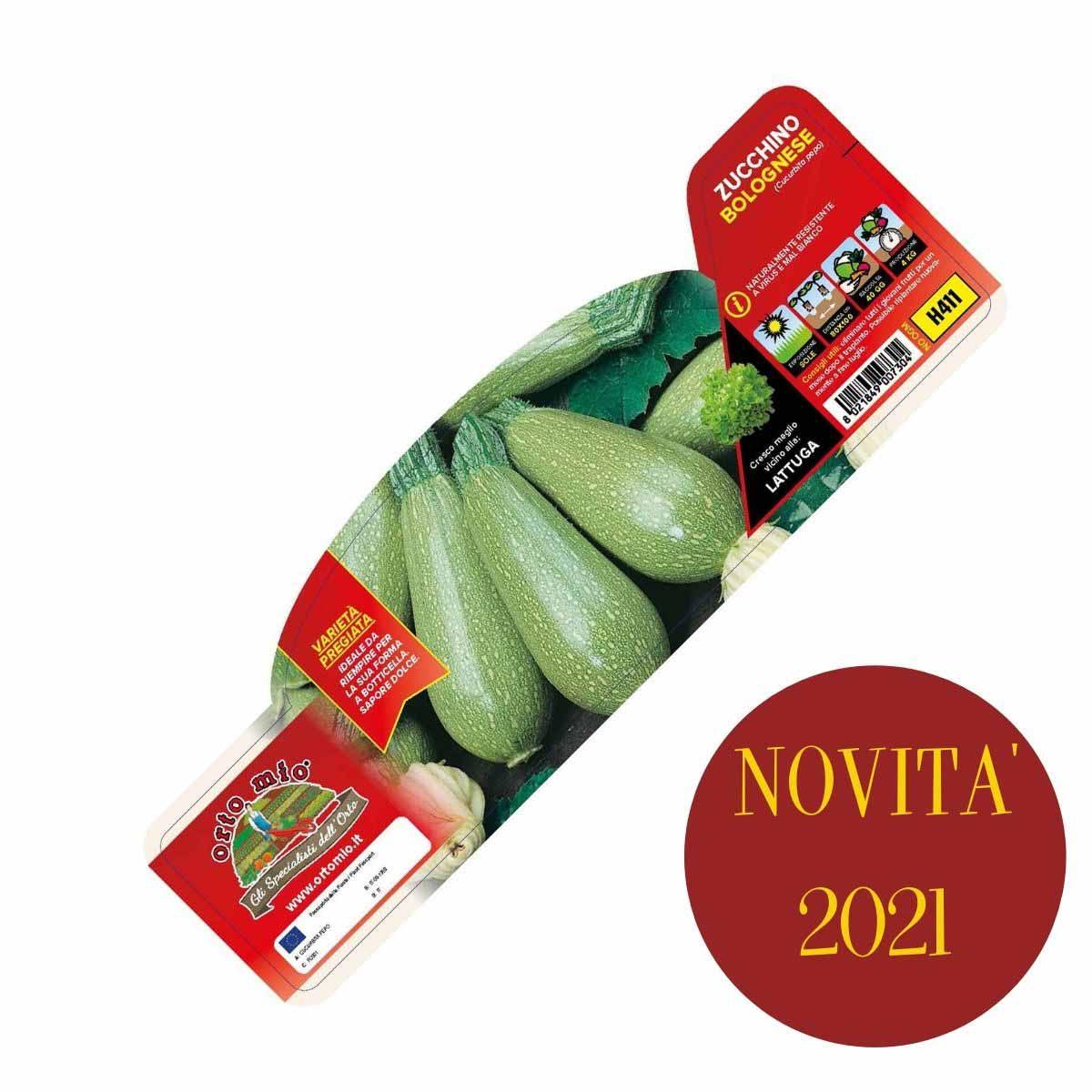 Zucchino Bolognese var. Mexicana F1