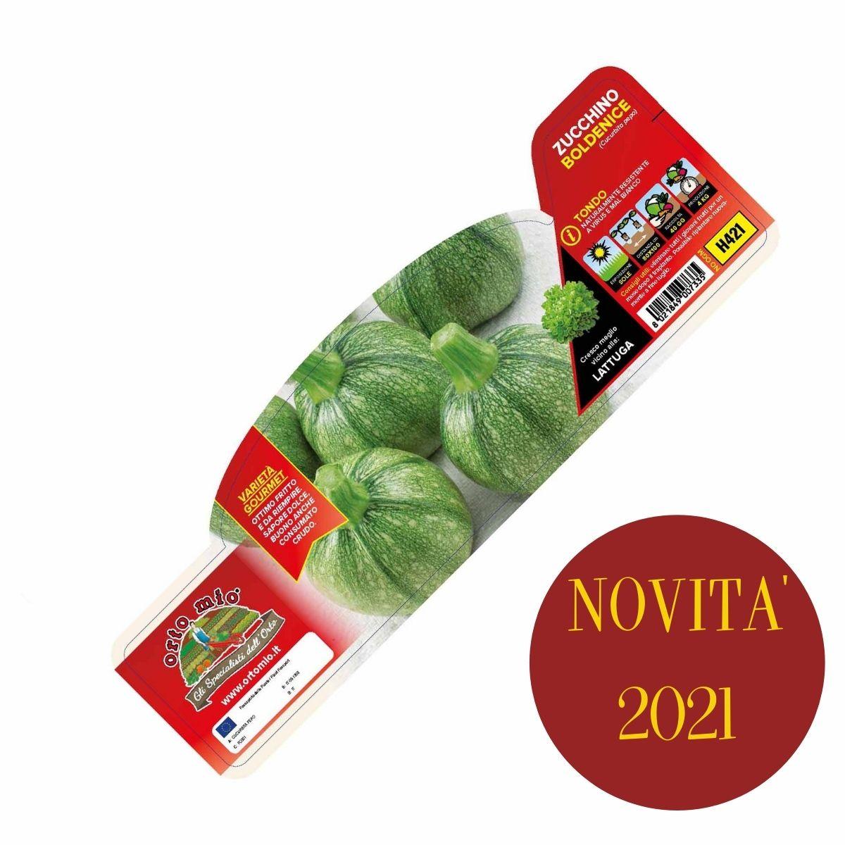 Zucchino Tondo var. Boldenice F1- Rondo F1