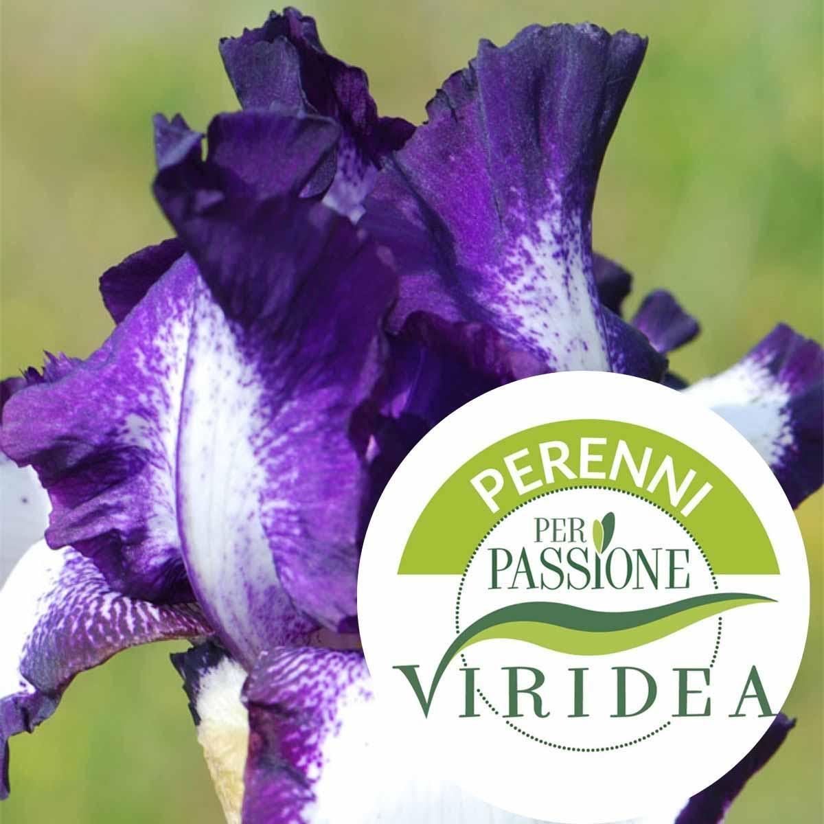 Linea Perenni per Passione – Iris in varietà