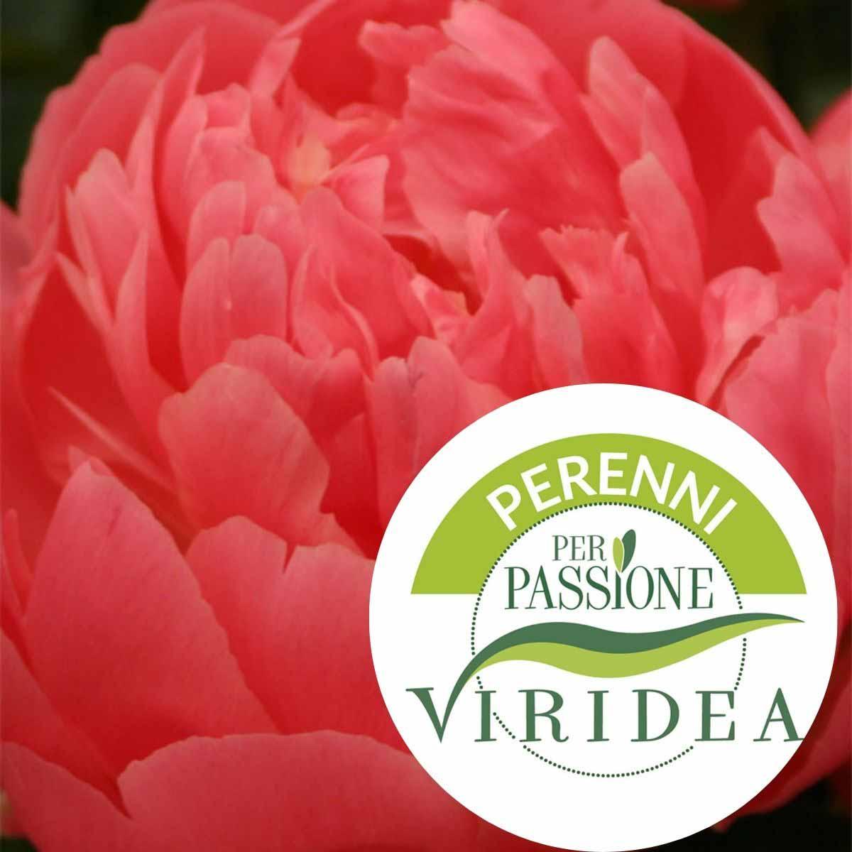 Linea Perenni per Passione – Paeonia in varietà