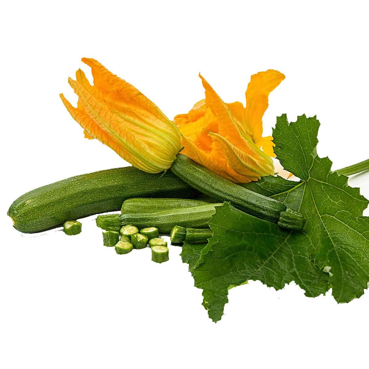 Zucchino in pack da 4 piante