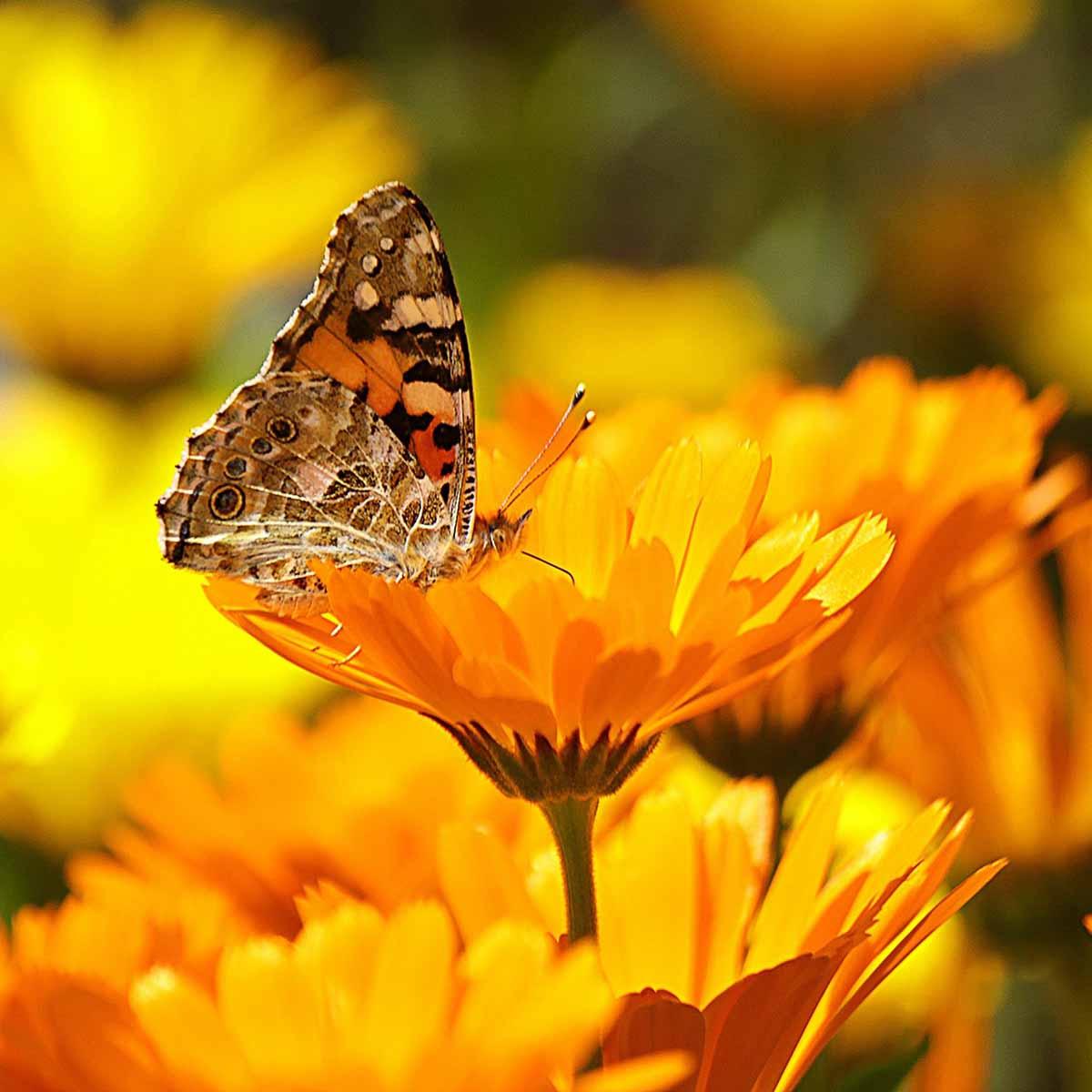 Api e farfalle per ritrovare serenità