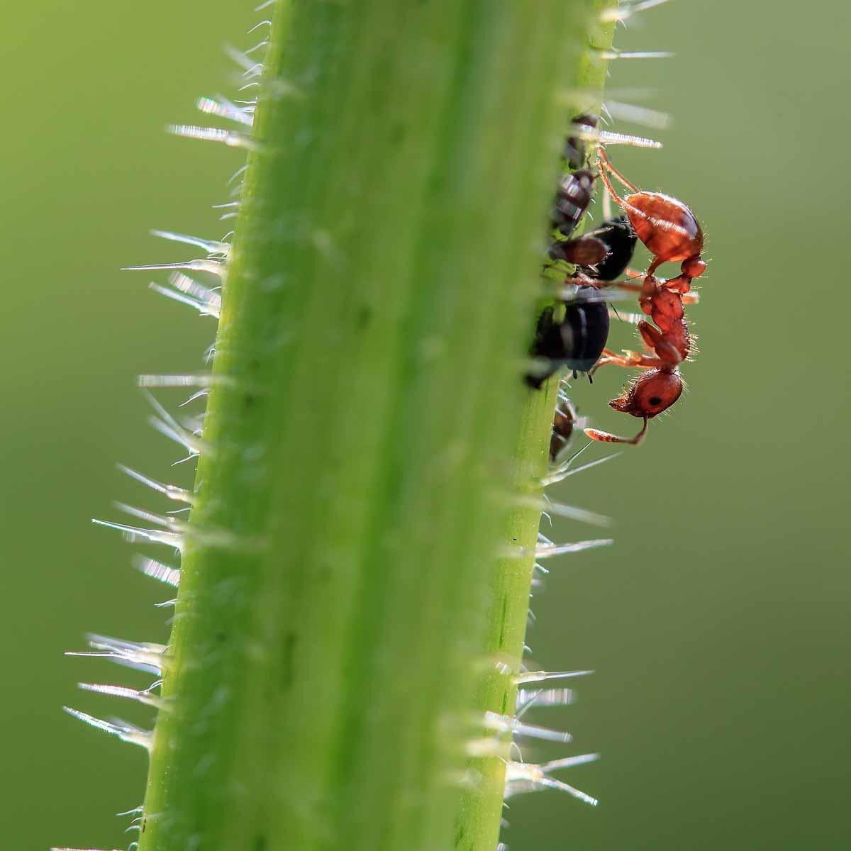 Colle e trappole adesive contro gli insetti