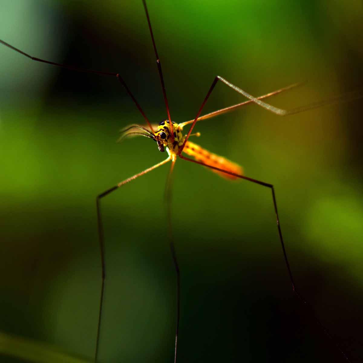 Relax, sì… Ma senza zanzare, grazie!