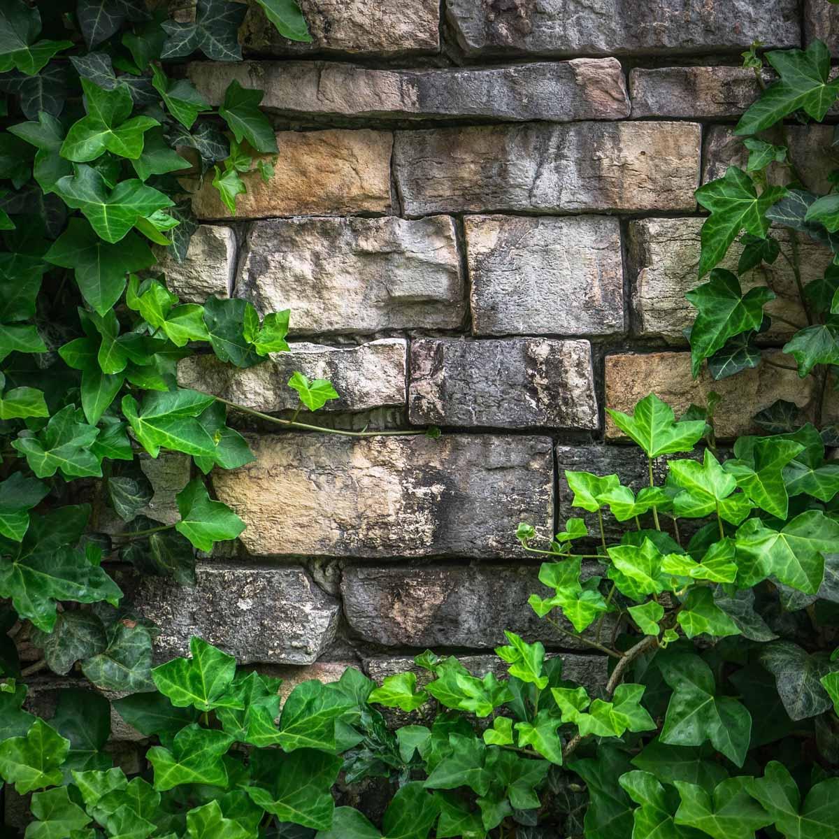 """Un """"natural wall"""" per inverdire le pareti"""