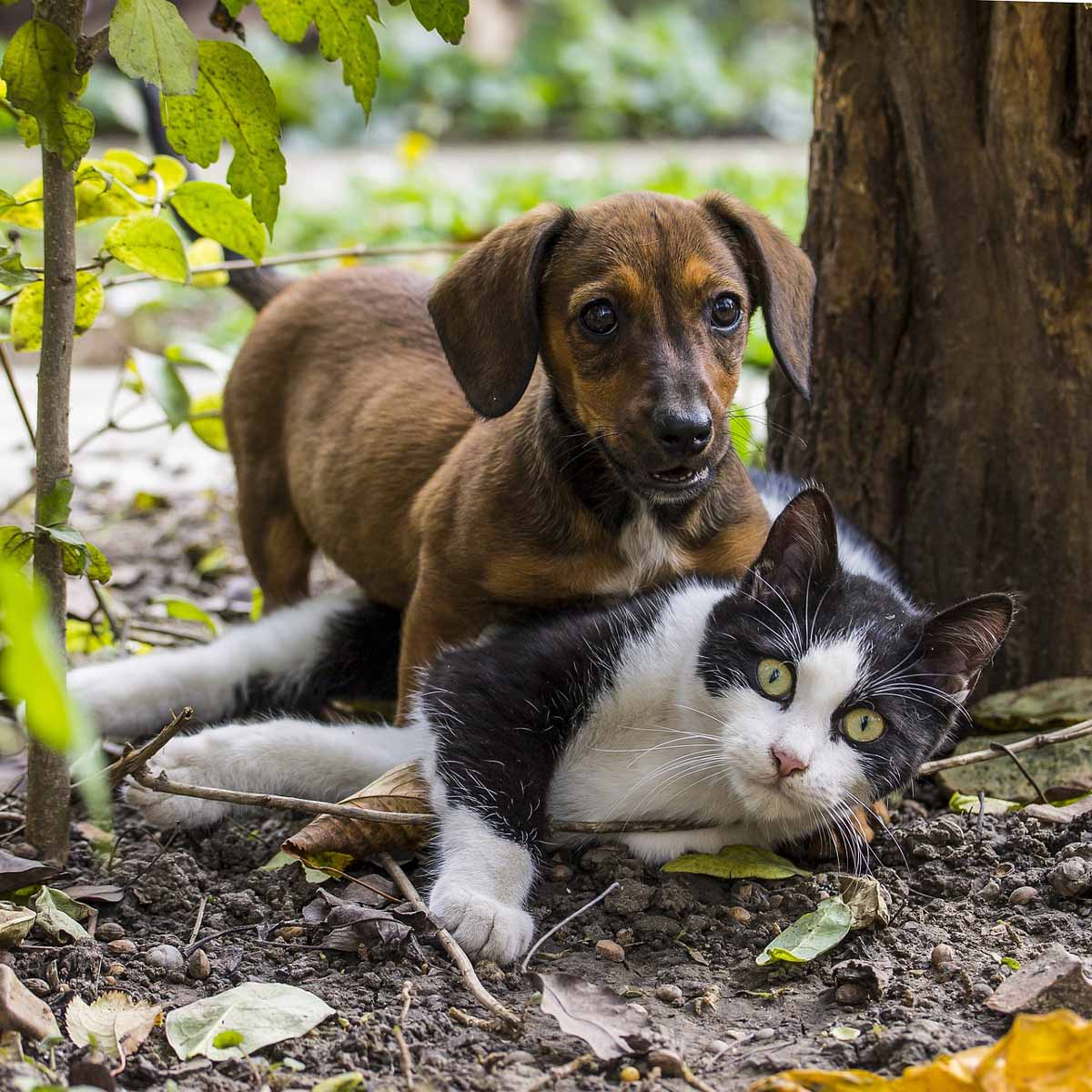 Pet gardening: il verde sicuro per uomini, cani e gatti